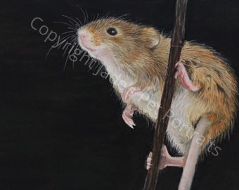 Harvest Mouse Portrait: Numbered Print