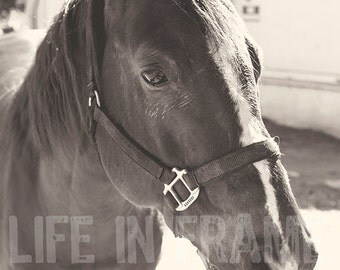 Horse, brown horse,western photography