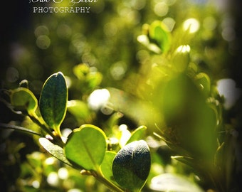 Green Leaves with Bokeh Lights, Nature,  Handmade Greeting Card, Blank  Inside, Fine Art Photography