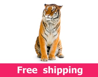 Tiger wall decal room decor, tiger wall sticker removable vinyl wild animal cat for nursery. tiger wall art cat mural lion design [img069]