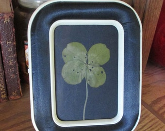Four Leaf Clover - Framed Clover