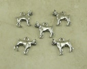 5 Boxer Dog Charms > Fancy Brindle Fawn Breed Puppy Doggy - Raw Unfinished American made Lead Free Silver Pewter I ship internationally