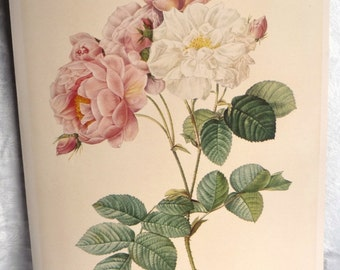 Redouté Damascene Rose Art Print- Floral Illustration- Vintage Pink White Green Flowers - Book Plate- Home Decor Wall Hanging- 1700s Artwork