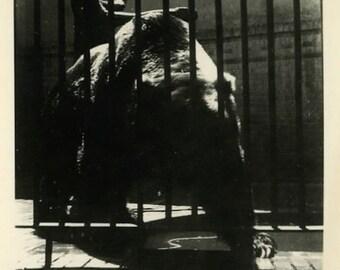 "Vintage Photo ""The Beast"" Animal Bear Zoo Cage Snapshot Photo Antique Old Black & White Photograph Found Paper Ephemera Vernacular - 34"