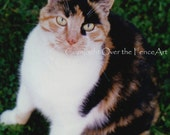 Cat Photograph Calico Cat Card Animal Photography Animal Art