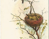 "Antique Easter Greeting Postcard ""Easter Greetings - To you my friend Peace and Health, without end"" Robin  Bird in nest Bird-nest Spring"