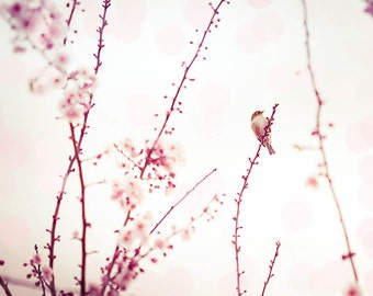 nursery decor girl bird print nursery decor wall art photography prints bird decor cherry blossom art floral photography nature pink pastel