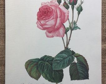 Vintage Print Rose, Redoute Rose Bookplate, French Bookplate Print, Rosier a feuilles de Laitue, Rosa Centifolia Bullata Print  #60 - 1