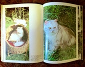 ON HOLD for DIANE Vintage Book : Beautiful Cats & Kittens