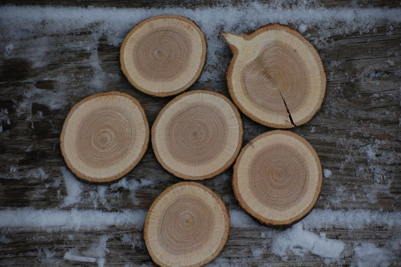 Maple Wood Tree ~ Maple wood rounds tree slices cookies fairy house