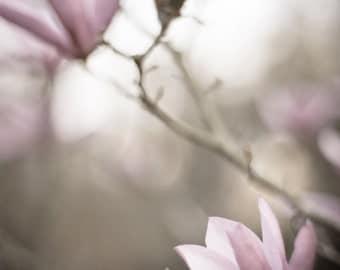 Fine Art Original Photography Print - Magnolia Blossom