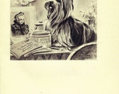 Dog Print,  YORKIE, Puppy Print, Art Print, Home Decor, Book Plate, Black & White Antique Illustration, Wall Decor, Collie, A-11