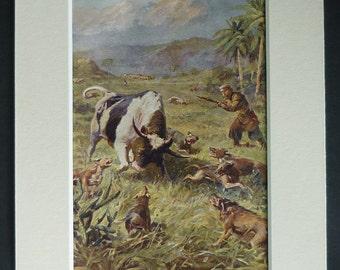 1914 Antique Hunting Print of a Shooter and Dogs Bringing Down a Wild Bull Haitian safari art, Caribbean natural history decor, Hunting Gift