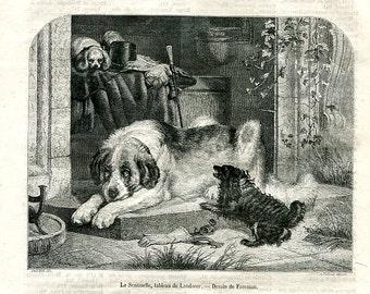 Antique Victorian Etching circa 1850 - Dog Art  -  St Bernard Dog -   A24