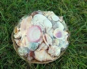 Natural Seashell Mix in Basket - (approx 30-40 shells) of Mixed Seashells for Beach Wedding and Decor