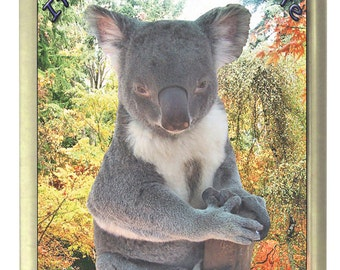 Cute Koala Fridge Magnet 7cm by 4.5cm,