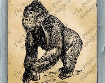 Gorilla Digital Download for collages iron on T-shirt transfer burlap pillows Vintage image Instant printable Ape African Primate Clip Art