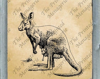 Kangaroo Digital Download for collages iron on T-shirt transfer burlap pillows Vintage image Instant printable Australian Animal Clip Art