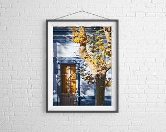 Fine Art Photography Print - Abstract, Still Life - Tree and Window - Colonia, Uruguay
