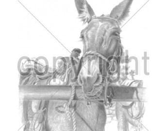 Mule Portrait  T SHIRT  Item # 249g