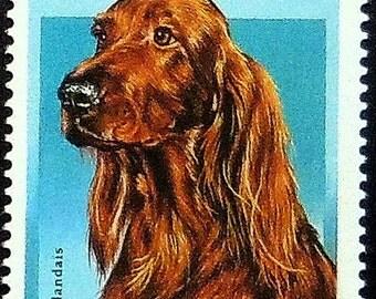 Irish Setter Dog -Handmade Framed Postage Stamp Art 10618AM