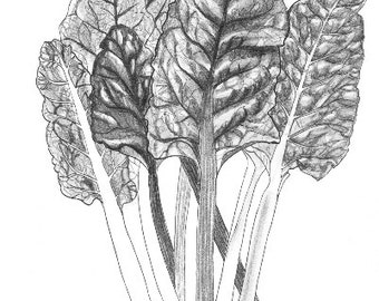 Rainbow chard print, black and white