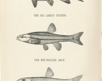 Big lips fish etsy for Big fish printing