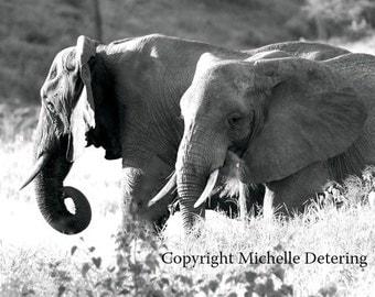 Elephant Photography- Black and White Art,Elephants, Elephant Pair, Wildlife Photography, Elephant Decor, Elephant Art, Elephant Photography