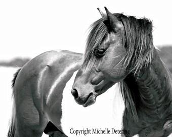 Wild Pony- Digital Photography - Horse Photography, Wild Horse Art, Horse Decor, Assateague Horse, Black and White Horse Photography