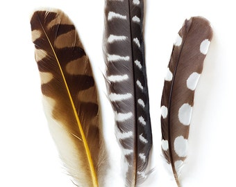 Fine Art photograph of three woodpecker feathers on white background