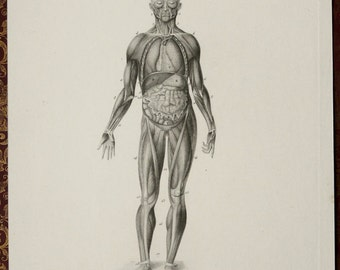 1849 Antique print of HUMAN ANATOMY: MUSCLES, main Organs. Skeleton. 167  years old gorgeous lithograph