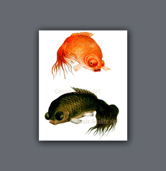 Antique fish art koi fish wall art print 10 symbol for love for Koi wall hanging