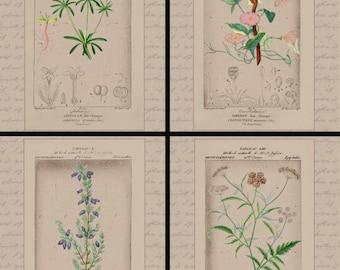 Botanical Prints-DIY Instant Download for Bell Heather, Bindweed, Blue Woodruff & Hartwort-Home Decor, Wall Decor, Art Prints, Vintage Print
