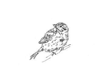 Bird Art - Giclee Print - Sparrow - songbird, line drawing, pen ink
