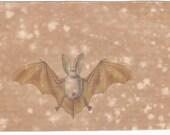 1837 white bat original antique hand colored chiroptera engraving -  La Chauve-Souris