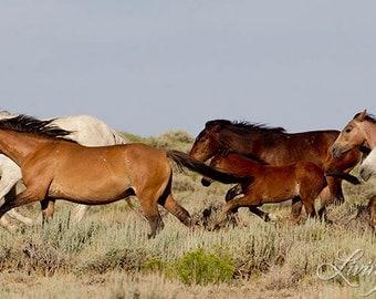 Wild Horses Run - Fine Art Wild Horse Photograph - Wild Horse - Adobe Town - Fine Art Print