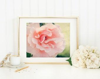 Girl Nursery Art - Just Joey Rose Print - Soft Pink, Peach - 11x14 Nature Photo - Dreamy Summer Flower Picture - Hybrid Tea Rose Photo