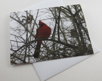 Cardinal Note Card, Note Cards, Blank Note Cards, Greeting Cards