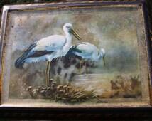 Beautiful 1920's Colman's Mustard tin with bird paintings, storks, swans, wild ducks, pheasants and partridge