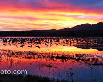 Sunset with Sandhill Cranes Bosque del Apache NWR, NM Color Photograph