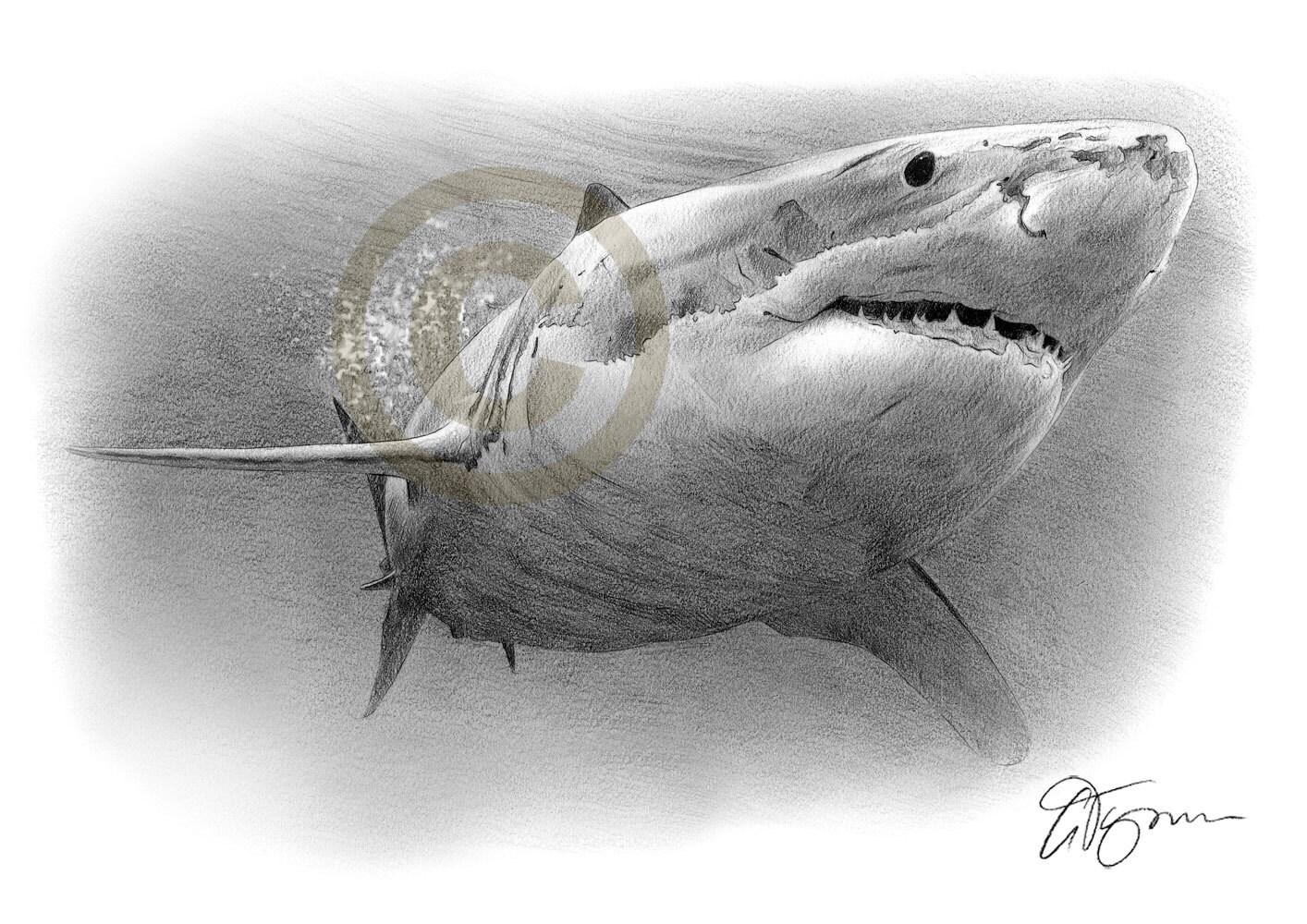 Grande squalo bianco matita disegno stampa formato a4 for Disegno squalo bianco