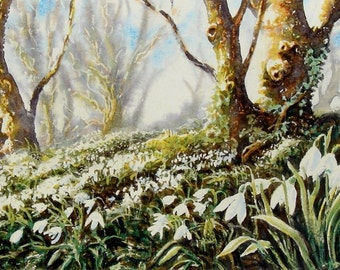 The Snowdrop Bank. Signed and limited print. Wildflowers, Woodlands, Owls , Hares, Birds and Coastal originals and signed prints.