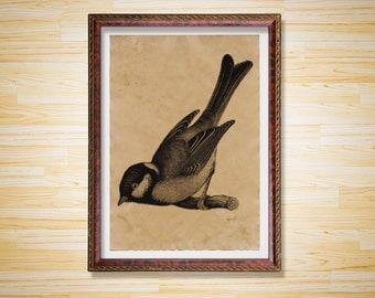 Bird poster Tit print Animal decor