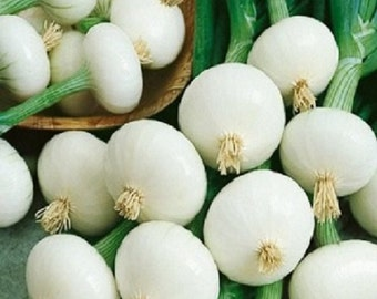 500 Seeds Onion Pickling Crystal White Wax Garden Seeds