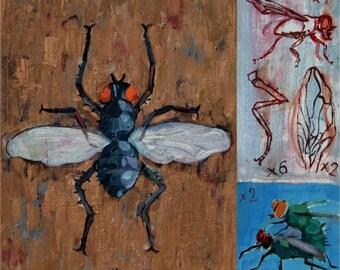 art print, illustration print, domestic fly