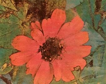 Colorful Floral Wall Art, Zinnia Sombrero Red, Original Photo Transfer, [8.5 x 9]