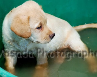 Puppy Photo Puppy Picture Baby Animal Photography Dog Portrait Pet Photography Animal Photography Fine Art Photography Prints