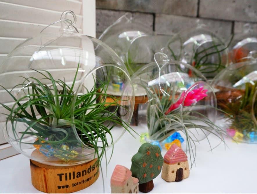 Tillandsia air plantes accessoires boule de verre suspendu - Boule verre suspendu ...