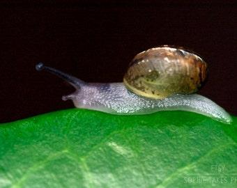 Snail print, snail photography, macro photography, animal, wildlife, snail picture, garden snail, fine art photography, framed print, square