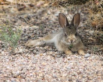 Bunny in the Desert